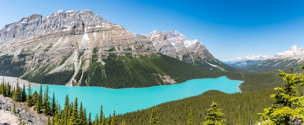 Panarama of lake payto in summer ,sunny dayfrom the top of the hiking trail in alberta, canada