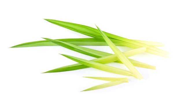 Pandan leaves isolated on white background