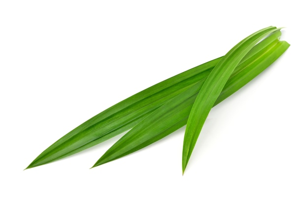 Pandan leaves isolated on white surface