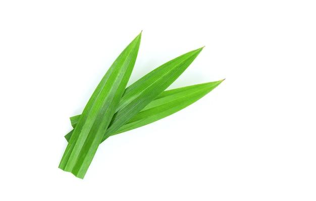 パンダンの葉またはパンダナスアマリリフォリアス緑の葉が白で分離されました。