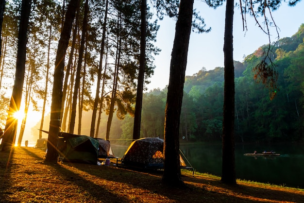 Pang oung lake and pine forest with sunrise in mae hong son , thailand