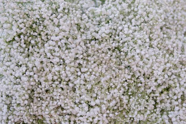 Маленькие белые цветы. paniculata flamingo