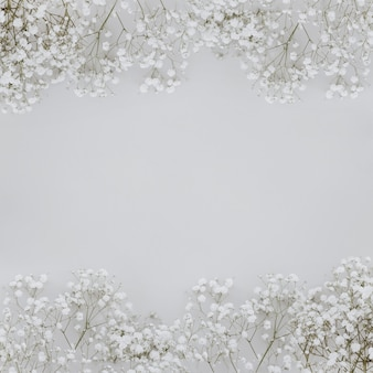 Paniculata flowers on grey background with copyspace in the middle