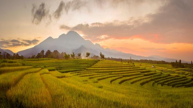 パノラマインドネシアの美しい山々と朝の黄緑色の田んぼの広大な広がり