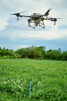 パノラマ農業ドローンがケールフィールドに噴霧された肥料に飛ぶ、スマートファーマーはドローンスマートテクノロジーコンセプトを使用