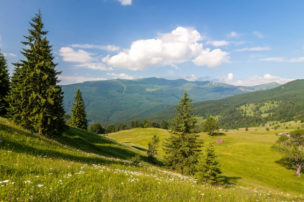 Panorama of carpathian mountains in summer with lonely pine tree