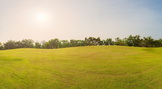 Panorama green grass on golf field in evening time,panorama green field landscape