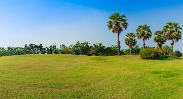 야자수가 있는 골프장에 있는 탁 트인 녹색 잔디, 파노라마 녹색 들판 풍경