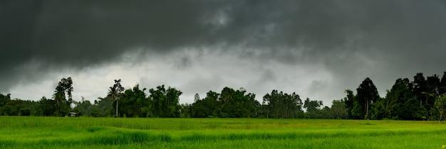 시골의 논 위에 하늘에 비의 파노라마 무거운 구름 폭풍
