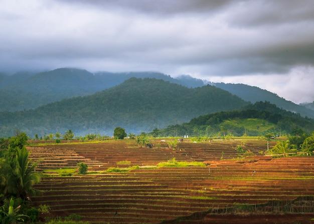 Panorama of kemumu rice terraces with dark clouds in north bengkulu, indonesia
