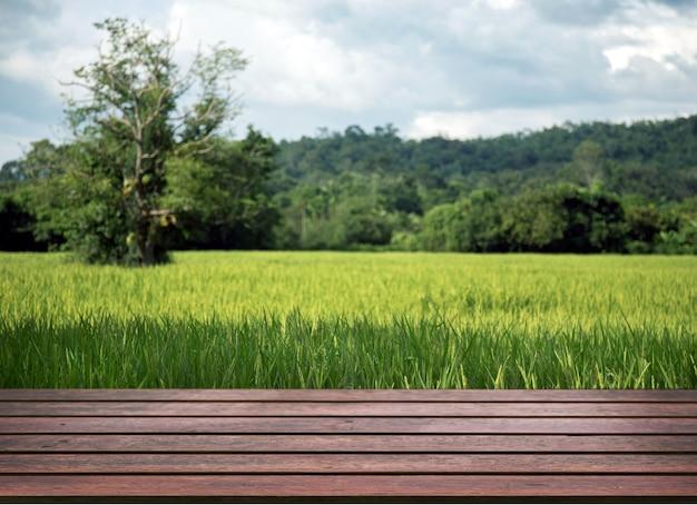 녹색 쌀에 대 한 파노라마 풍경 필드 초점