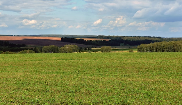 Panorama of a large beautiful field and blue sky