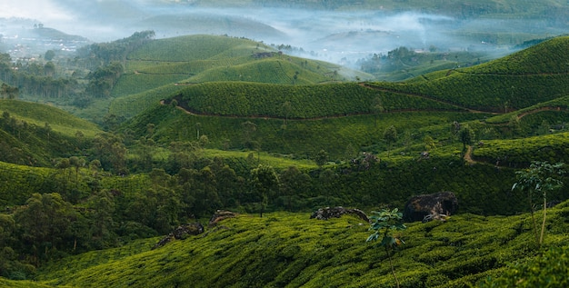 Panorama of morning foggy tea plantation in munnar, kerala, india. mountain landscape view with mist in the valley. village and tea factory on the back.