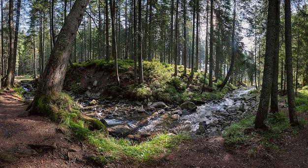강 큰 숲의 파노라마