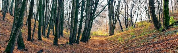 Панорама осеннего леса с голыми деревьями и грунтовой дорогой в солнечный день