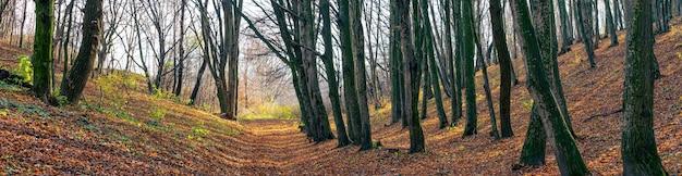裸の木と落ち葉が地面にある秋の森のパノラマ。森の中の晩秋