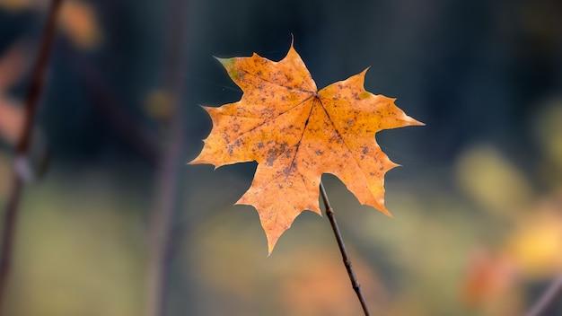 木の幹と色とりどりの葉が木の上にある秋の森のパノラマ。秋の森