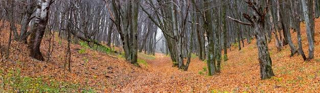 落ち葉のある秋の森のパノラマ。森と木々の間の道と秋の風景 Premium写真