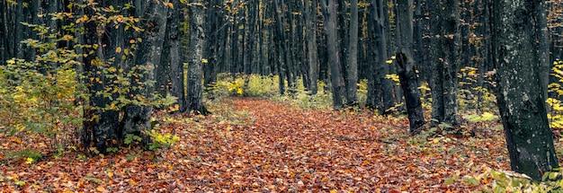 未舗装の道路に落ち葉のある秋の森のパノラマ。秋の風景