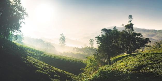 日の出の美しい茶畑のパノラマ。ケララ州、インド。