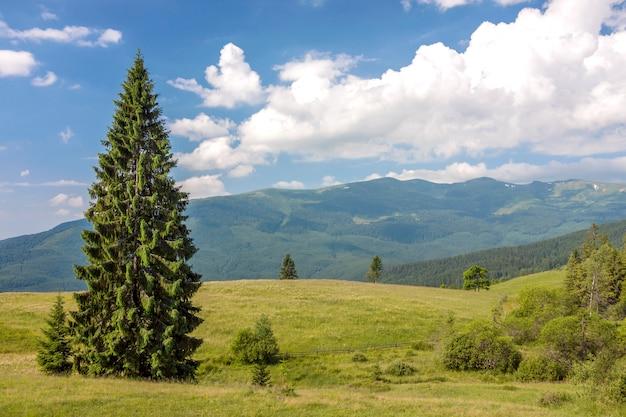Панорама карпатских гор летом с одинокой сосной, стоящей впереди, и пухлые облака и горные хребты пейзаж на фоне