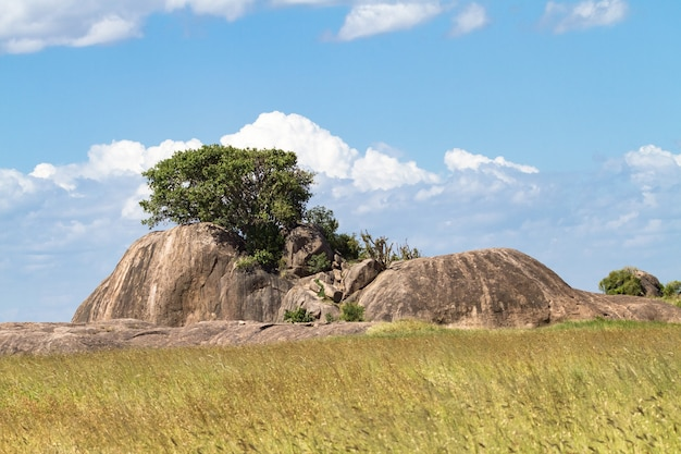Панорама серенгети. деревья на камнях. танзания, африка