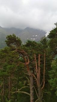 緑のコーカサス山脈のパノラマ