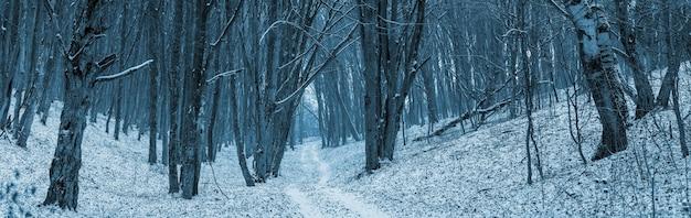 Панорама зимнего леса с узкой дорогой между деревьями в долине между холмами