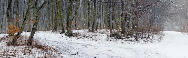降雪時の暗い木々と冬の森のパノラマ。森の木々のある冬の風景 Premium写真
