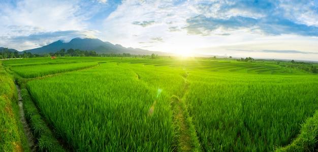 朝の光の中でパノラマの水田