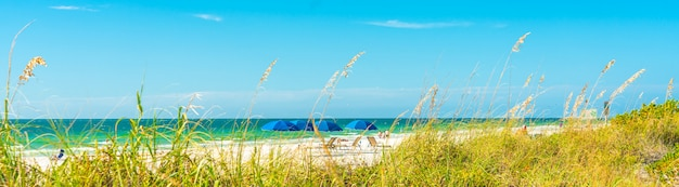 Panorama sunny beach with grass and blue sky in florida