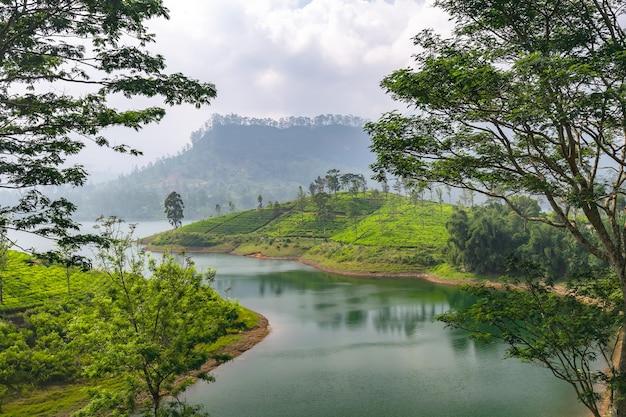 Panorama of tea plantation, sri lanka