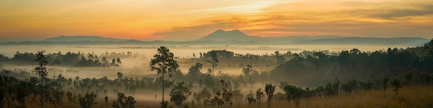 Panorama view beautiful sunrise landscape of forest