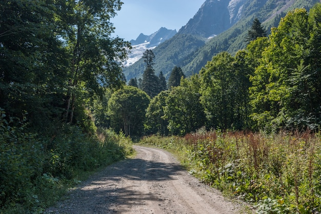 Panorama view of deep forest scene in national park of dombay, caucasus, russia. summer landscape, sunshine weather and sunny day