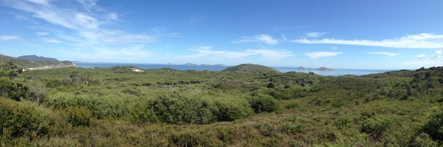Panorama view of forest ocean