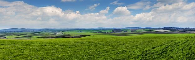 겨울 밀의 녹색 필드에서 땅에 이른 봄에 파노라마보기