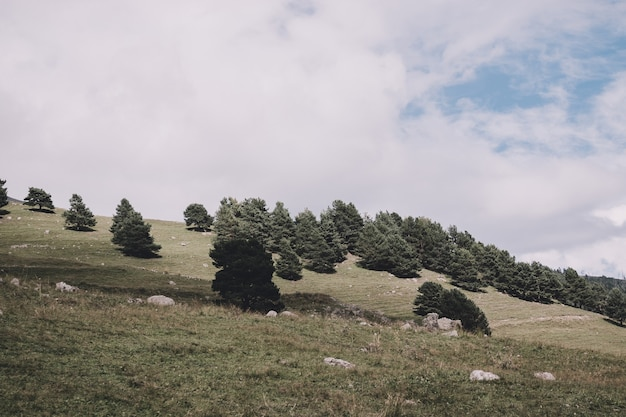러시아 코카서스 주 돔베이 국립공원에서 숲과 산의 전경을 조망할 수 있습니다. 극적인 푸른 하늘과 맑은 풍경