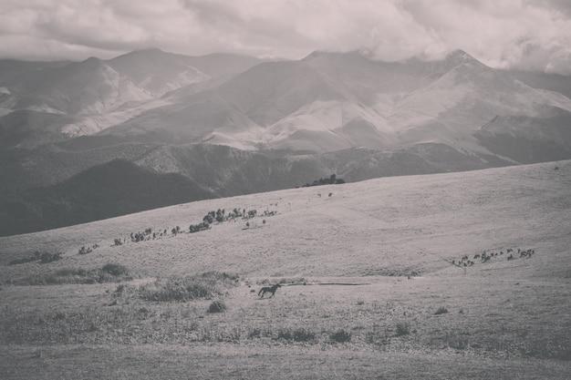 国立公園ドンベイ、コーカサス、ロシア、ヨーロッパの山と谷のシーンのパノラマビュー。劇的な青い空と晴れた夏の風景