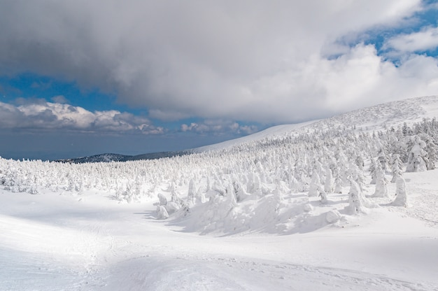 Panorama view of snow monster on mt.zao