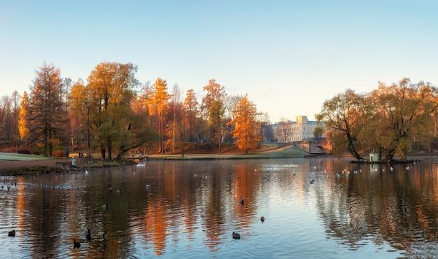 白鳥と海岸の大宮殿のある朝の公園のパノラマの秋の景色。ガッチナ。ロシア。
