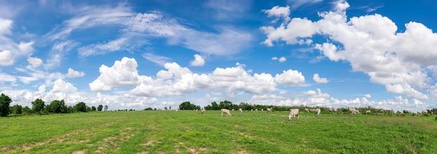 背景の緑の野原の風景とパノラマの青い空雲