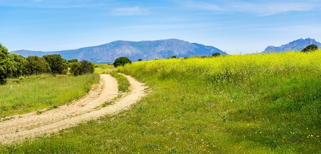 野花と山への未舗装の道路のあるパノラマの田園地帯