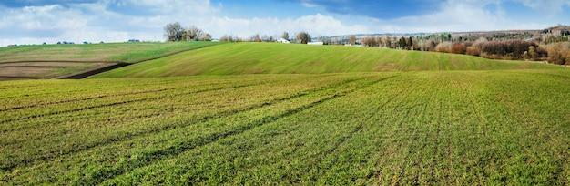 겨울철 밀밭, 황변, 비료 부족