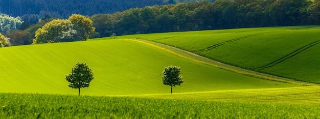 Панорамный зеленый пейзаж в солнечный день