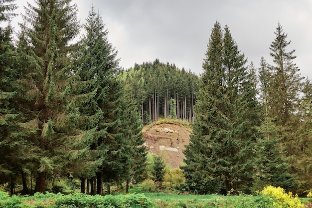 Panoramic landscape picture of green forest with mountain and trees on surface