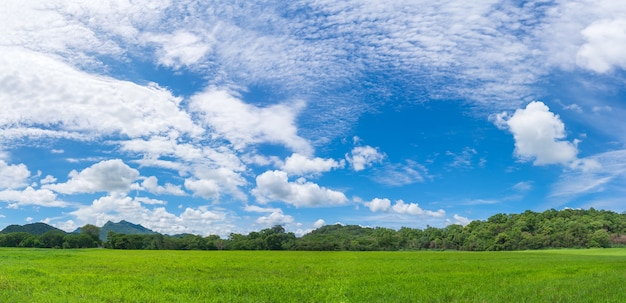 Panoramic landscape view of green grass field agent blue sky in countryside of thailand
