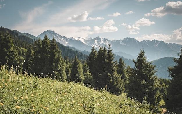 Панорамный вид на горы и лес и снежные вершины в горах кахастана.