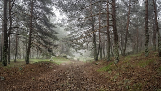 森林伐採につながる石の小道のある魅惑の森のパノラマ。モルクエラ。