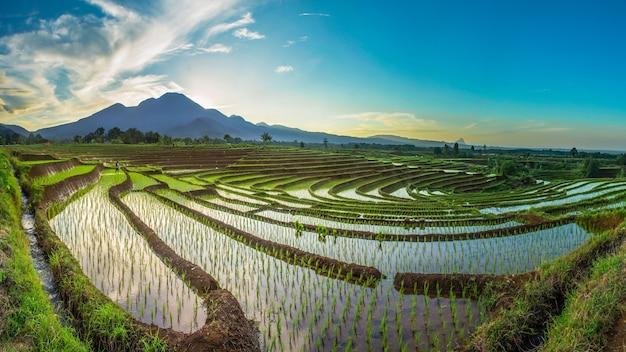 Панорамный вид на рисовые поля утром с горным хребтом индонезия