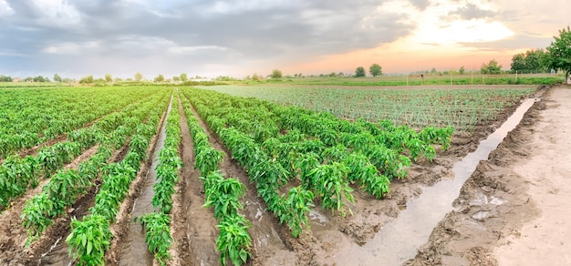Panoramic photo of agriculture.